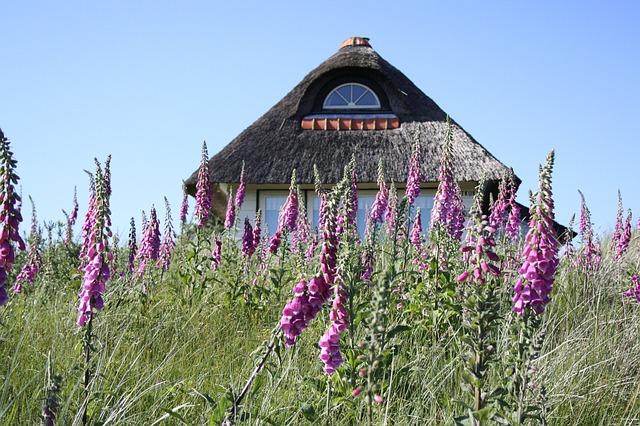 dům, tráva, fialová kytka
