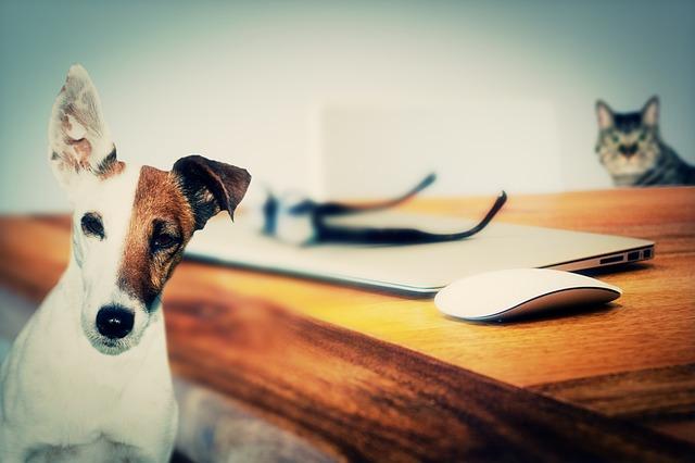 pes a kočka u stolu