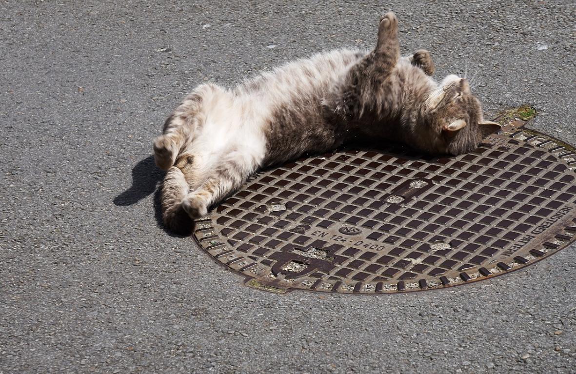 kočka a kanál